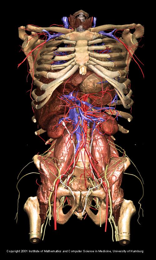 Gross Anatomy Home Page